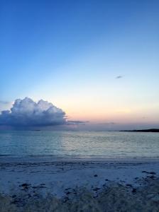 Great Exuma, Bahamas, Pigs25
